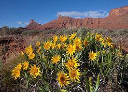 Moab River Rafting Flowers
