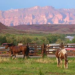 Westwater Canyon Horseback
